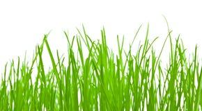 vert d'herbe de fond Images stock
