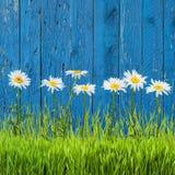 Vert d'herbe de source?, frais et sain Photographie stock libre de droits
