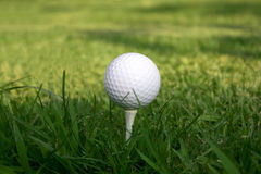 Vert d'herbe de té de bille de golf Images libres de droits