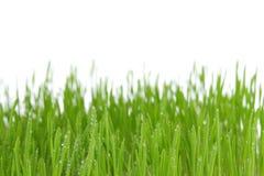 vert d'herbe frais Photo stock
