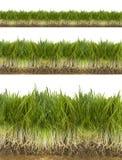 vert d'herbe frais Photos stock