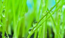 vert d'herbe proche de rosée de fond vers le haut Image libre de droits