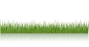 vert d'herbe reflété illustration de vecteur
