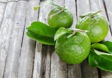 Vert d'oranges Image libre de droits