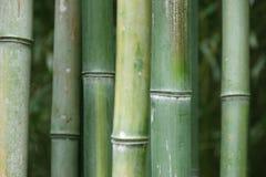 vert de bambou Photographie stock libre de droits