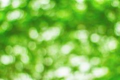 Vert de Bokeh de tache floue de milieux d'arbre Photographie stock libre de droits