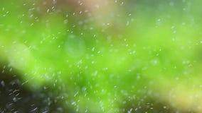 Vert de bulles banque de vidéos