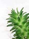 vert de cactus Image stock