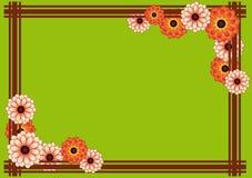vert de chrysanthemum de fond Photos stock