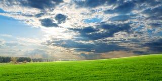 vert de collectes au-dessus de coucher du soleil Photos stock