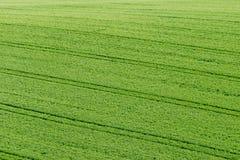 Vert vert de culture d'herbe de pré de champ jeune photos stock