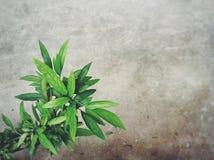 Vert de feuille Images stock