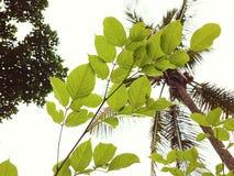 Vert de feuilles Photos libres de droits