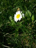 Vert de fleur Images stock