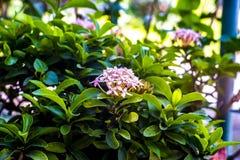 Vert de fleur de transitoire tellement tellement ainsi image libre de droits