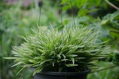Vert de fleurs Images stock