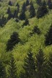 Vert de forêt Photos libres de droits
