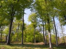 vert de forêt Photo libre de droits