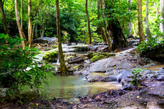 Vert de Forest Erawan avec l'arbre Photographie stock libre de droits