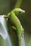vert de gecko photo libre de droits