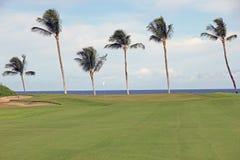 Vert de golf avec un cadre de palmier Photographie stock