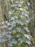 Vert de jardin Image libre de droits