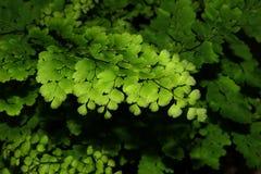 Vert de lame Photographie stock libre de droits