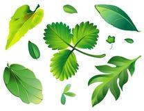 Vert de lames illustration stock