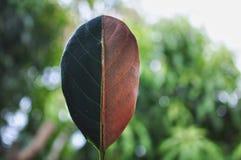 Vert de moitié et demi feuille sèche d'automne sur le fond de bokeh photo stock
