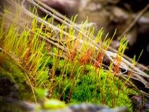 Vert de mousse Photo libre de droits