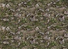 Vert de mousse d'écorce de pin de modèle de texture avec des corrections de plan rapproché superficiel par les agents Image libre de droits