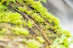 Vert de mousse imbibé au soleil photo libre de droits