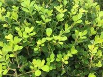 Vert de nature Image stock