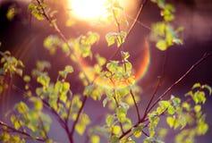 Vert de nature de fusée de lentille photos stock