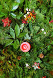 Vert de Noël   Image libre de droits