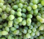 Vert de raisins Photographie stock