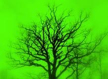 Vert de silhouette d'arbre Photographie stock libre de droits