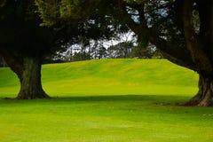 Vert de terrain de golf du Nouvelle-Zélande images stock
