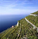 Vert de terrasses de vignes de la Suisse Vaud Lavaux de paysage marin photographie stock