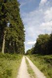 Vert della pista del terreno boscoso Fotografie Stock