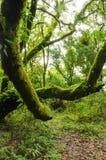 Vert des arbres dans le primitif de forêt, Thaïlande Images stock