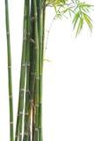 Vert en bambou frais d'isolement sur le fond blanc Photos libres de droits