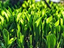 Vert ensoleill? photographie stock libre de droits