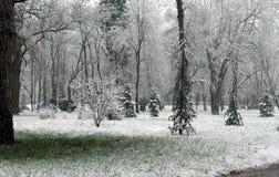 Vert et blanc Image libre de droits