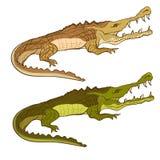 Vert et brun de crocodile Image de bande dessinée de vecteur d'isolement Photographie stock libre de droits
