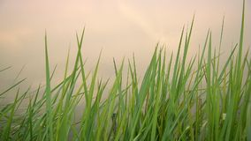 Vert et eau d'herbe clips vidéos