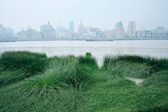 Vert et eau dans la ville Photos stock