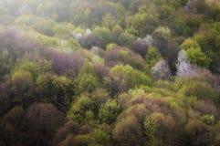 Vert et floraison d'arbres au printemps images libres de droits