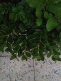Vert et gris Image stock