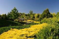Vert et jaune Images libres de droits